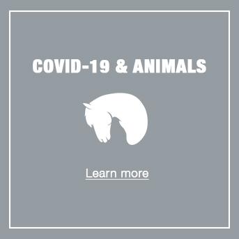 COVID and Animals