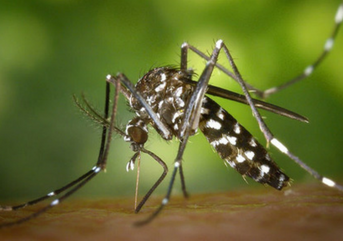 west nile virus aaep